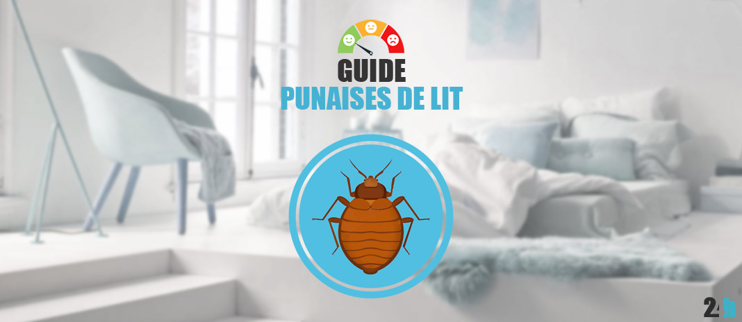 Punaises De Lit Traitement Solutions Et Guide 2019